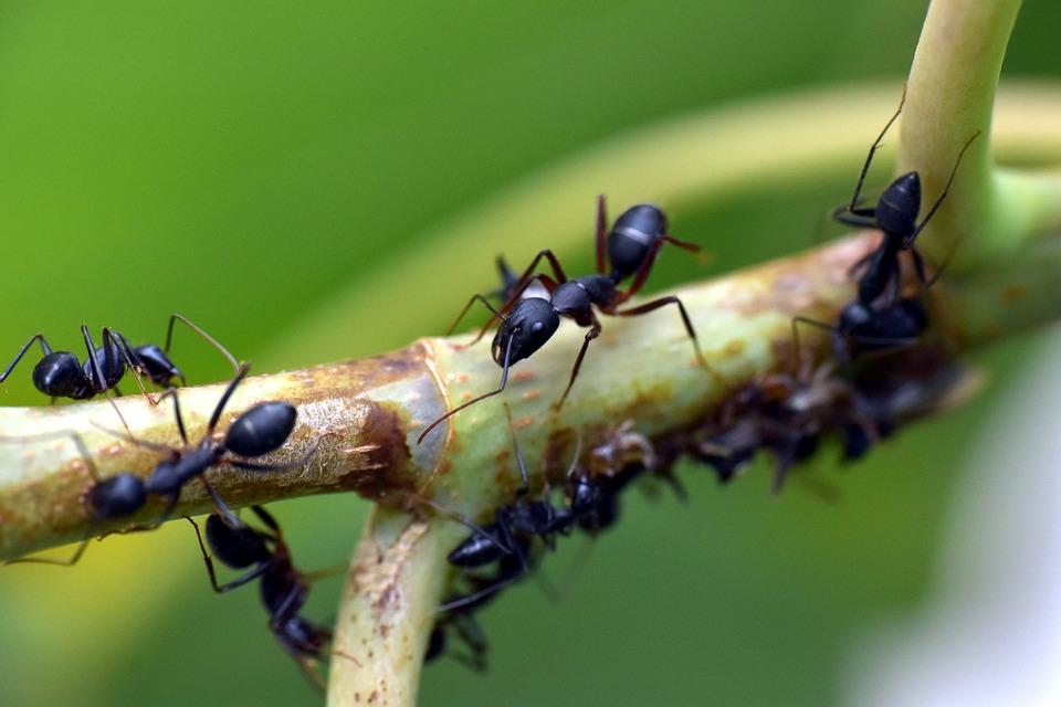 הדברת נמלים, הדברה לנמלים